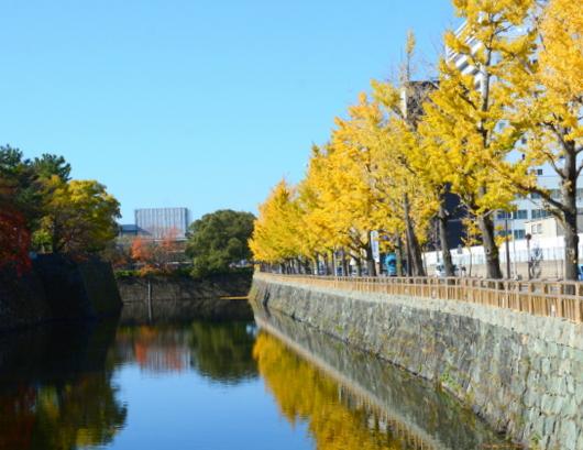 1-17.11.30 銀杏の黄葉-2.jpg