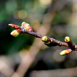 1-18.01.22 桜-2.jpg