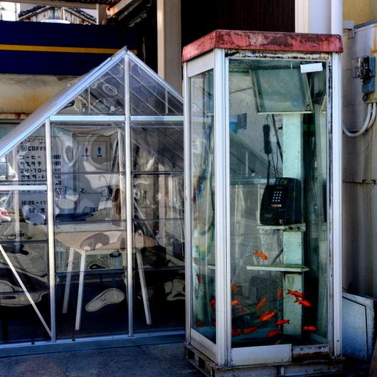 1-18.02.27 金魚の電話ボックス.jpg