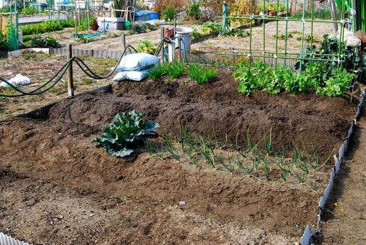 1-18.03.05 菜園-1.jpg
