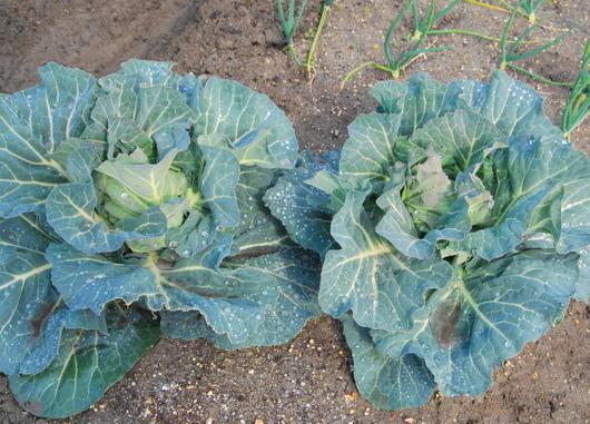 1-18.03.05 菜園-3.jpg