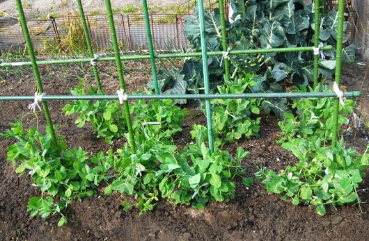 1-18.03.05 菜園-5.jpg