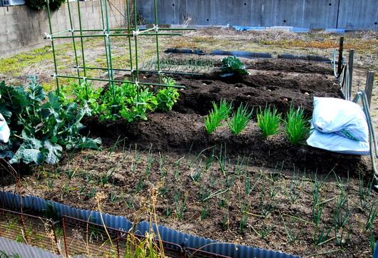 1-18.03.05 菜園-7.jpg