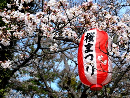 1-18.03.26 和歌山(城)公園の桜-1.jpg