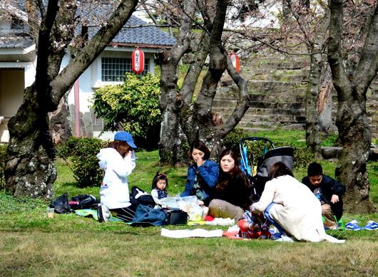 1-18.03.26 和歌山(城)公園の桜-3.jpg