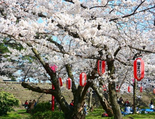1-18.03.29 和歌山(城)公園の桜-7.jpg