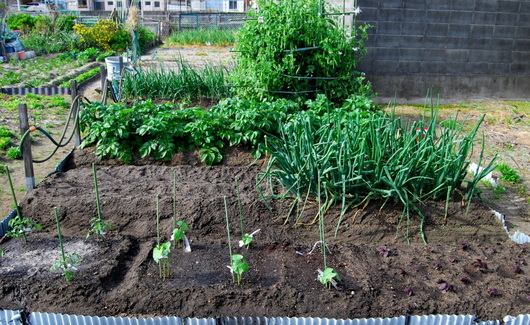 1-18.04.25 菜園-1.jpg