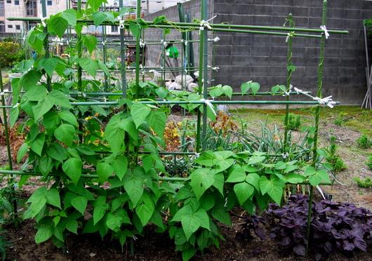 1-18.05.31 菜園-3.jpg