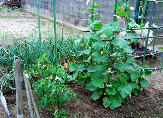 1-18.05.31 菜園-7.jpg
