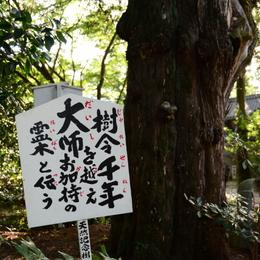 1-46番 浄瑠璃寺-3.jpg