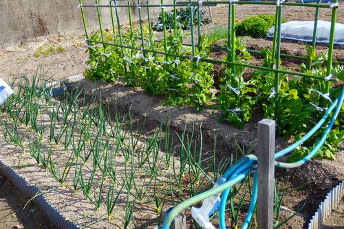 132-14.02.28 菜園-2.jpg