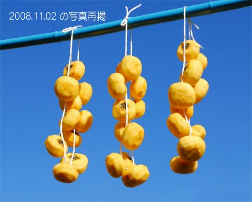 s-08.11.25 11月2日吊し柿再掲.jpg