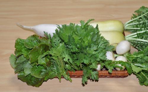 s-09.12.24 昨日の収穫.大根、チシャ菜、春菊、小蕪.jpg
