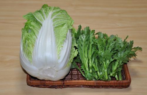 s-09.12.27 今日の収穫.白菜、春菊.jpg