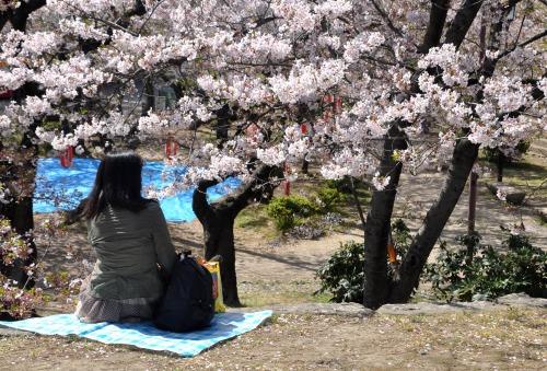 s-10.04.10 まだ咲いています桜ソメイヨシノ.jpg