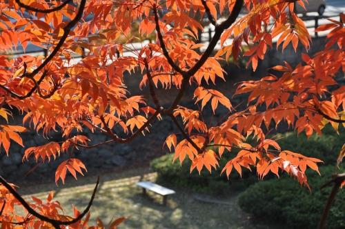 s-10.11.28 和歌山城公園.ハゼ.jpg