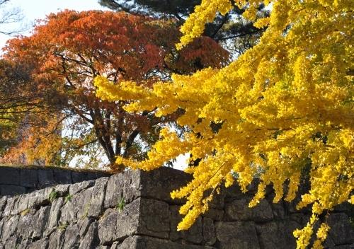 s-10.11.28 和歌山城公園.追廻門付近の銀杏.jpg