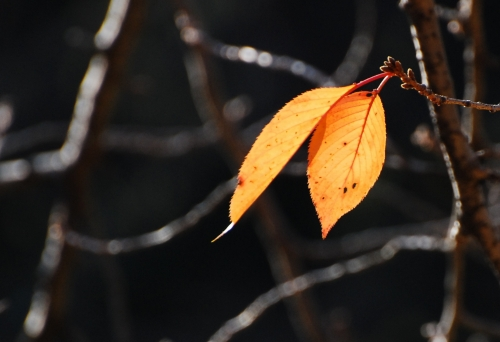 s-10.12.04 和歌山城公園.残った葉っぱ.jpg