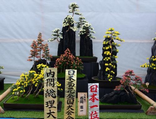 s-13.11.15 菊花展-9.jpg