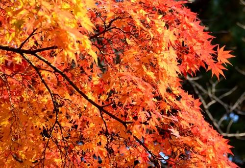 s-13.12.07 紅葉-3.jpg