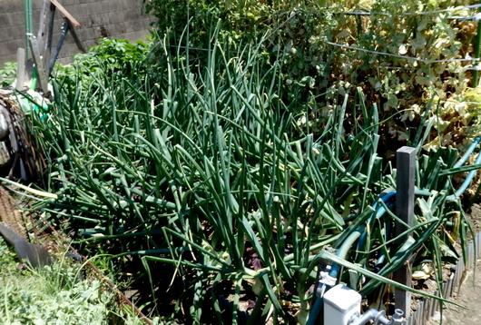 1-14.05.18 菜園-1.jpg