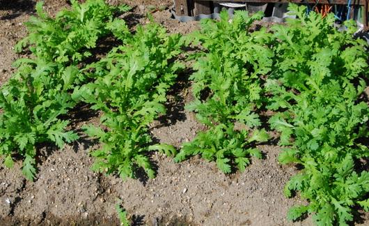 1-14.10.09 菜園-10.jpg