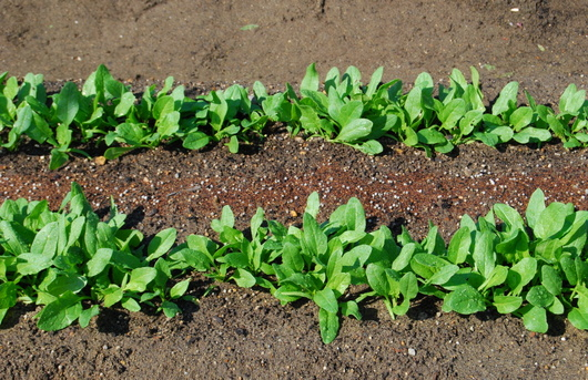 1-14.10.09 菜園-2.jpg