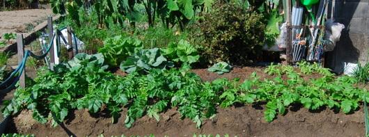 1-14.10.09 菜園-4.jpg