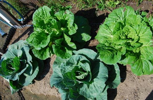 1-14.10.09 菜園-6.jpg