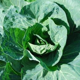 1-14.10.09 菜園-7.jpg