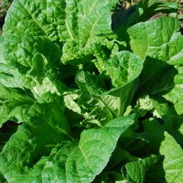 1-14.10.09 菜園-8.jpg