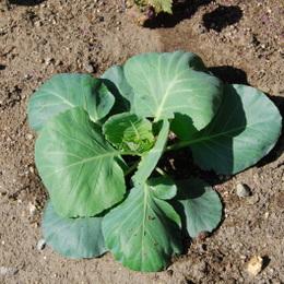 1-14.10.09 菜園-9.jpg