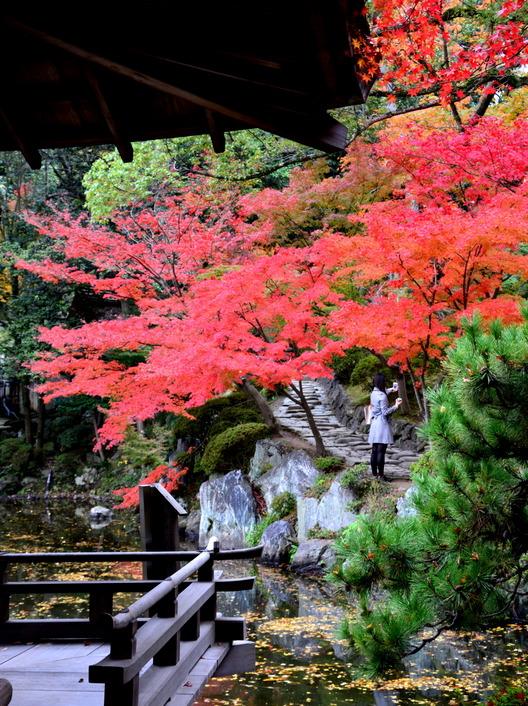1-14.11.28 紅葉渓庭園-6.jpg