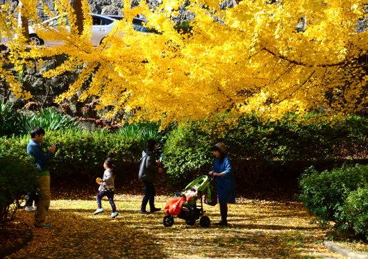 1-14.12.02 和歌山城公園の銀杏-6.jpg