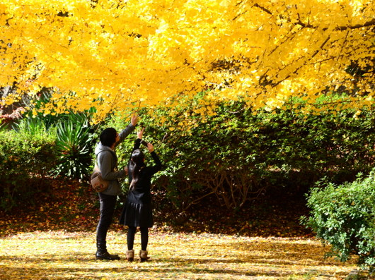 1-14.12.02 和歌山城公園の銀杏-7.jpg