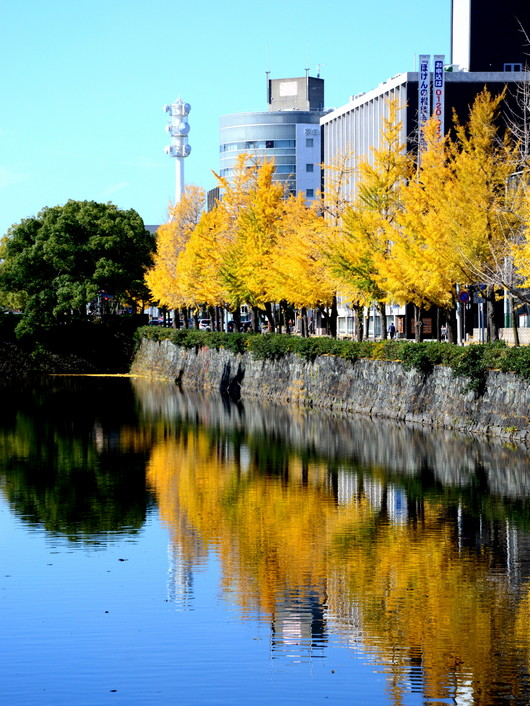 1-14.12.02 和歌山城公園の銀杏-8.jpg