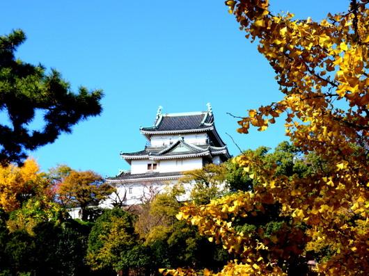 1-14.12.02 和歌山城公園の銀杏-9.jpg