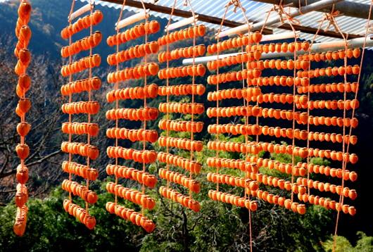 1-14.12.06 四郷の串柿-3.jpg