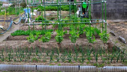 1-15.02.03 菜園-1.jpg