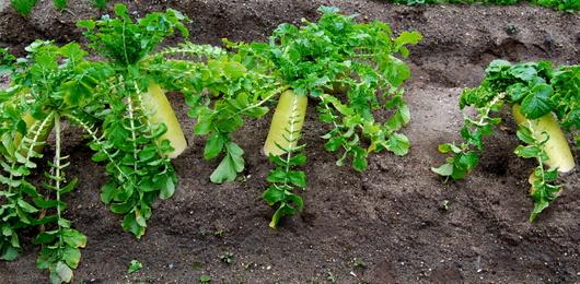 1-15.02.03 菜園-5.jpg