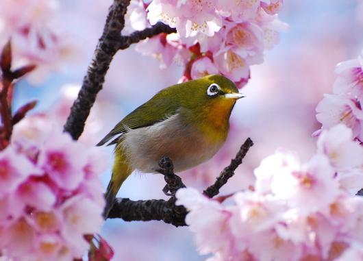 1-15.03.02 嘉ヶ作の桜-6.jpg