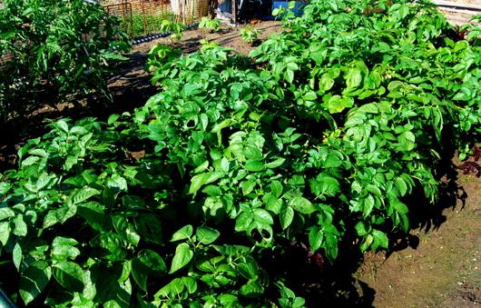 1-15.05.27 菜園-6.jpg