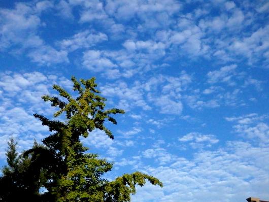 1-15.09.13 秋の雲-12.jpg