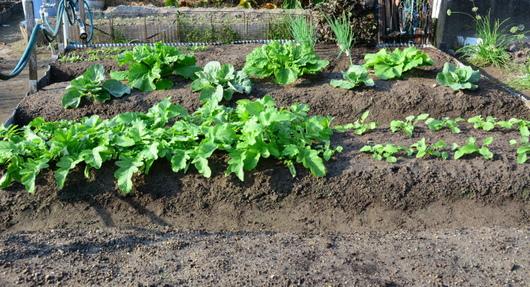 1-15.09.26 菜園-1.jpg