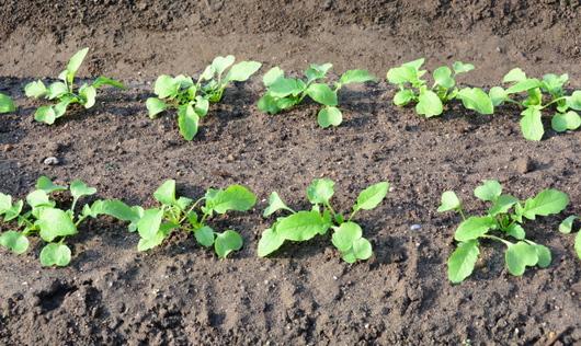 1-15.09.26 菜園-3.jpg