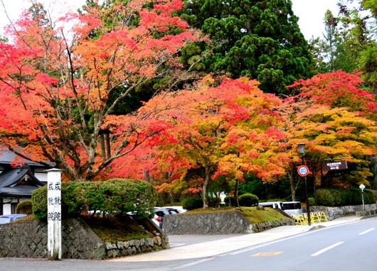 1-15.11.03 高野山の紅葉-2.jpg