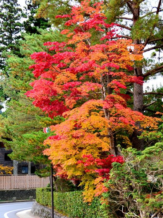 1-15.11.03 高野山の紅葉-3.jpg