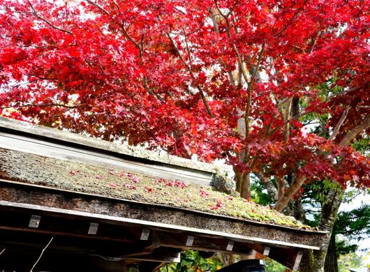 1-15.11.03 高野山の紅葉-6.jpg