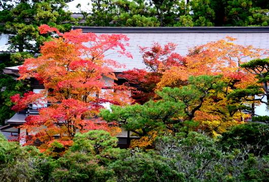 1-15.11.03 高野山の紅葉-8.jpg