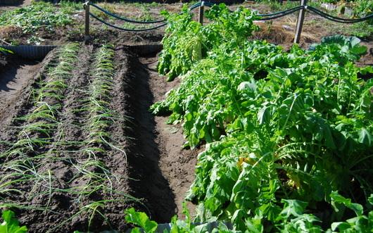 1-15.11.14 菜園-4.jpg